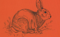 RabbitMQ深入理解(三)高阶/网络分区/消息追踪/负载均衡